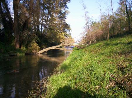 contre canal (arbre mort)